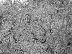 彩度を0にした紅葉の写真